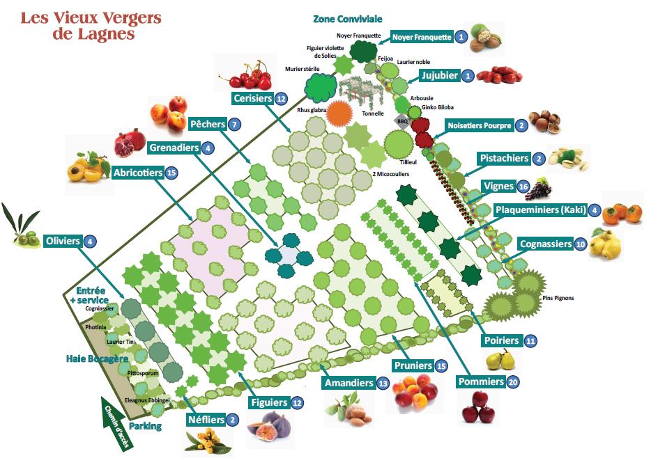 Carte Vieux Vergers de Lagnes